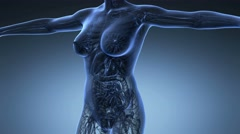 science anatomy of human body in x-ray with all organs on blue background - stock footage