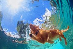 Underwater photo of dog swimming in outdoor pool Stock Photos