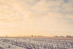 Countryside landscape in the wintertime - stock photo