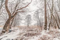 Forest at wintertime with snow Stock Photos