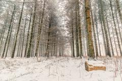 Snow in a forest at wintertime Stock Photos