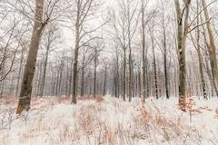 Scandinavian forest in the snow - stock photo