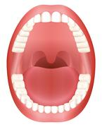 Teeth Open Mouth Adult Dentition Stock Illustration