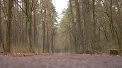 The girl with mother walks through the woods in autumn Stock Footage