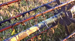 Rice, Wheat harvesting shearers, Combine autumn harvest of the rice and wheat Stock Footage