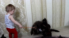 The child plays with cheerful seals Maine Coons Stock Footage