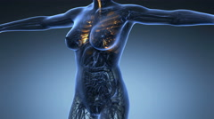Science anatomy of human body in x-ray with glow lungs on blue background Stock Footage