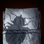 Bed Bug Fear - stock illustration