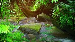 Heavy rain in rainforest. Video UltraHD - stock footage