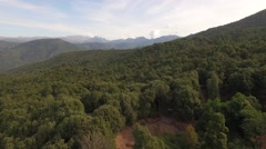 Aerial Corsica Drone forest - stock footage