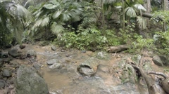Palms and other trees along muddy banks of tropical, wilderness stream Stock Footage