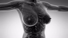 Stock Video Footage of loop science anatomy of human body in x-ray with all organs