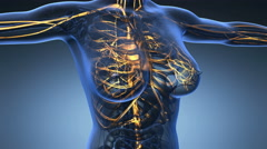 Loop science anatomy of human body in x-ray with glow blood vessels Stock Footage