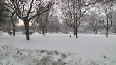 Frozen Park At Niagara Falls Buffalo Stock Footage