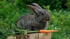 Rabbit. Beautiful animal of nature - stock footage