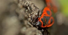 Shield Bug Insect Macro On Tree Stock Footage