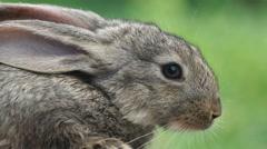 Rabbit. Beautiful animal of wild nature Stock Footage