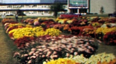 1961: Colorful flower garden in full bright bloom summer peak. Stock Footage