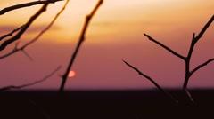 Tree branch apricot silhouette on orange sunset landscape Stock Footage