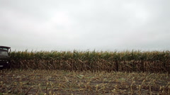 Harvesting sweet corn for ensiling Stock Footage