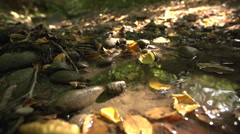 Autumn Leaves In A Stream - stock footage