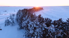 Windbreak of Evegreen Trees in the Snow (Aerial) Stock Footage