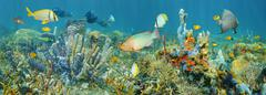 Coral reef marine life underwater panorama - stock photo