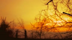 Dry branch sunset silhouette tree on nature orange landscape Stock Footage