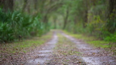 Empty Dirt road in a southern swamp Stock Footage