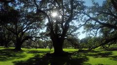 Beautiful summer sun shining through big majestic live oaks canopies Stock Footage