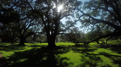 Beautiful summer sun shining through big majestic live oaks canopies - stock footage