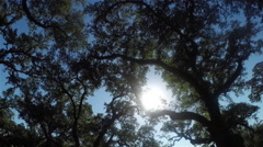 Beautiful summer sun shining through big majestic live oaks canopies - stock footage