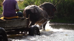 Horse-drawn carriage crosses the river Stock Footage