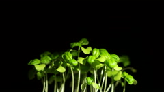 Green Grass on Black Background Stock Footage