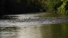 Târnava Mare River - stock footage