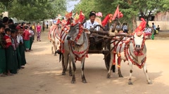 Decorated buffalo and local people in Bagan. Myanmar, Burma Stock Footage