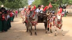 Decorated buffalo and local people in Bagan. Myanmar, Burma Stock Footage