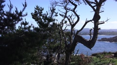 Point Lobos State Park, peaceful resting spot Stock Footage