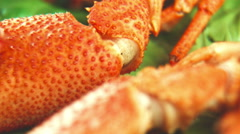 Close shot of claw of crayfish Stock Footage