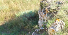 Rock covered with lichen and grass in the wind about Stock Footage