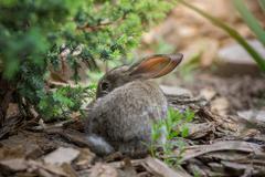 Rabbit is Beautiful Animal of Nature - stock photo