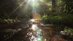 Stream in the forest Stock Footage