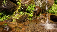 Watering Place - Water Stream Close Up Stock Footage