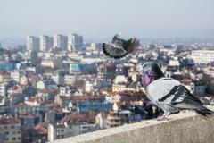 General high view of Varna, Bulgaria. Dove in the foreground Stock Photos