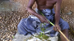 Man Peeling Cinnamon Branch in Traditional Way Stock Footage