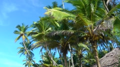 Palms and the Blue Sky Stock Footage