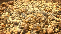 Coffee beans, collected from stool of civets for production of Kopi Luwak Stock Footage