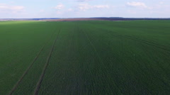 Wonderful aerial view of fields of young wheat. 4K Stock Footage