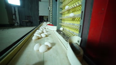 Egg production line in action on the poultry farm Stock Footage
