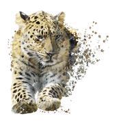 Leopard Portrait Watercolor - stock illustration